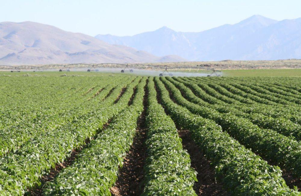 service-potato-field